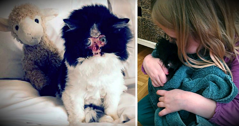 An Accident Left This Kitty With No Face, But She's Loved Just As She Is
