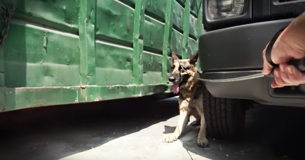 Kind Security Guards Team Up To Rescue This Poor Homeless German Shepherd