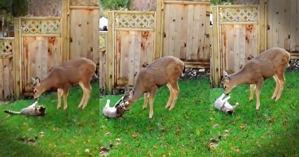 Passing Deer And A Cat Form An Adorable Friendship
