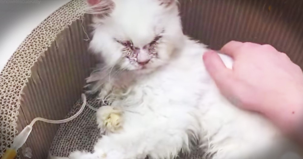 Cat Doctors Thought Was Too Sick To Survive Has A Loving Furever Home