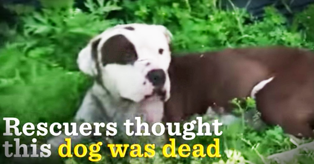 Rescuers Thought This Poor Dog Was Dead But Just Look At Him Now
