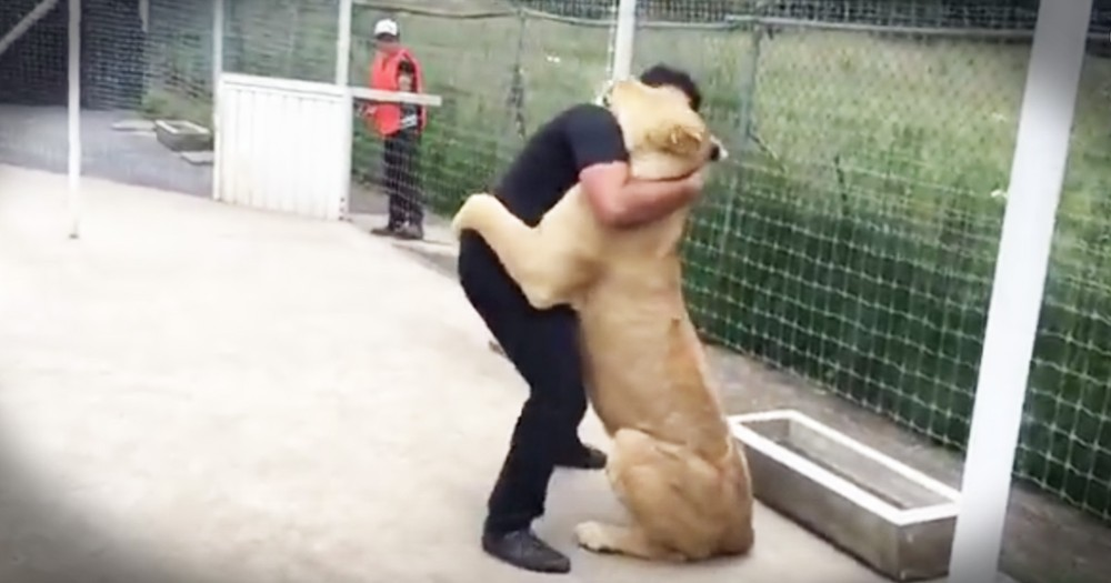 Rescued Lion Can't Stop Snuggling The First Man Who Showed Her What Love Is