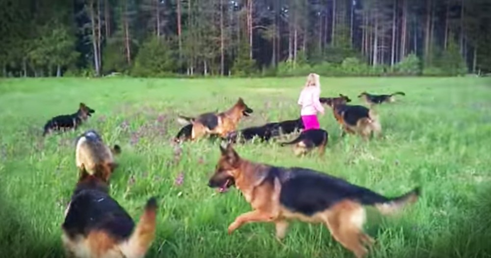 5-Year-Old Playing In A Field With 14 German Shepherds Is Living Our Dream