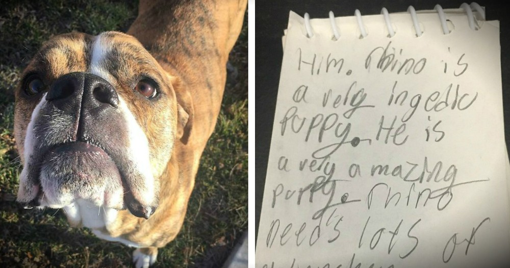 Rescue Dog Is Returned To The Shelter With A Letter Attached