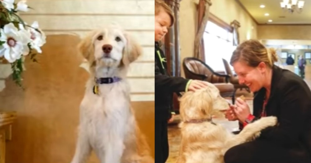 Funeral Home Comforts Grieving Families With Help From A Furry Friend