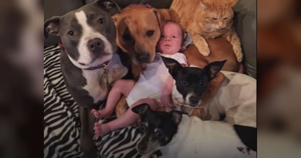 Baby Is So Loved By His Furry Siblings And It's The Cutest