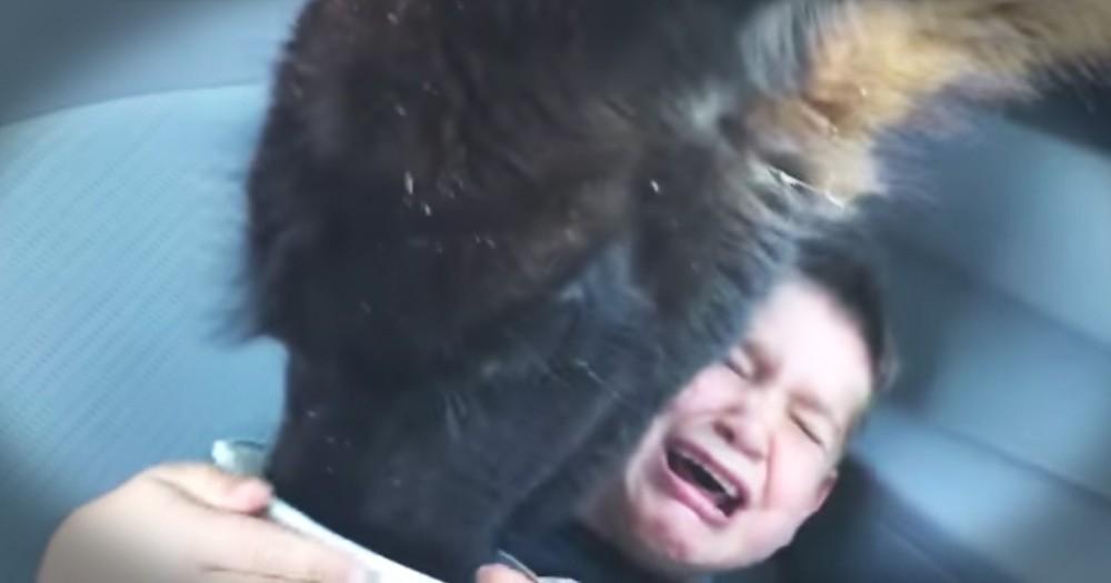 Family's Lama Feeding Adventure Takes A Hilarious Turn