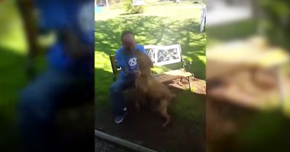 Dog Recognizes Owner After Weight Loss During Hospital Stay