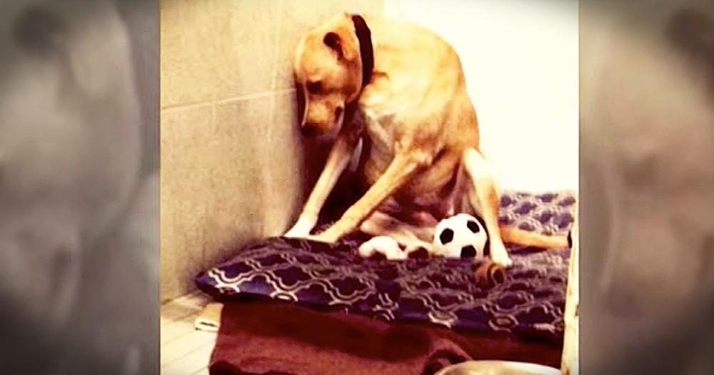 Sad Dog Gets Forever Home After Being Returned Twice