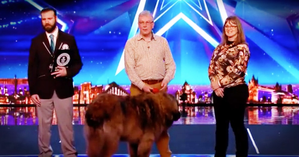 Married Couple Was about To Start Their Audition And Then Their Dog Ran On Stage
