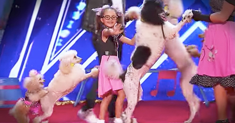 Talented Dogs' Audition Brings The Smiles