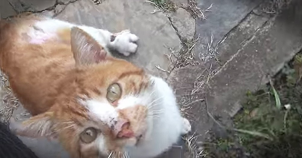 Injured Stray Cat Asks For Help At Stranger's Door Step