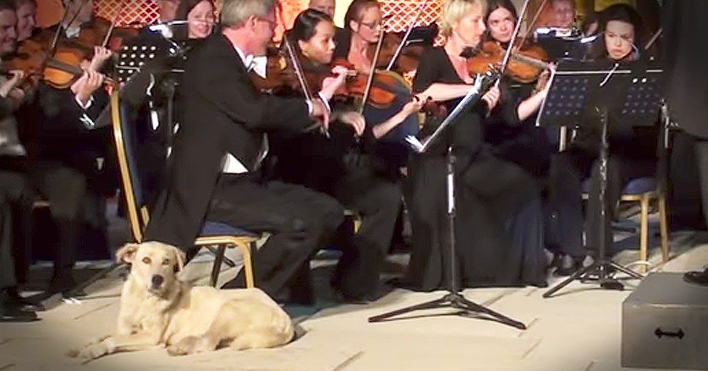 Dog Steals The Show During Orchestra Performance