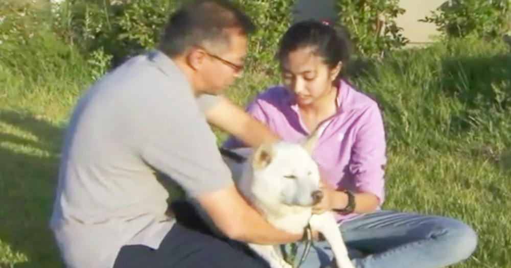 Veteran Rescues Dog From Pack Of Vicious Coyotes