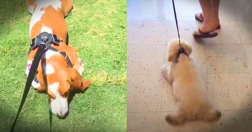 Hilarious Dogs Who Refuse To Come Inside Mashup