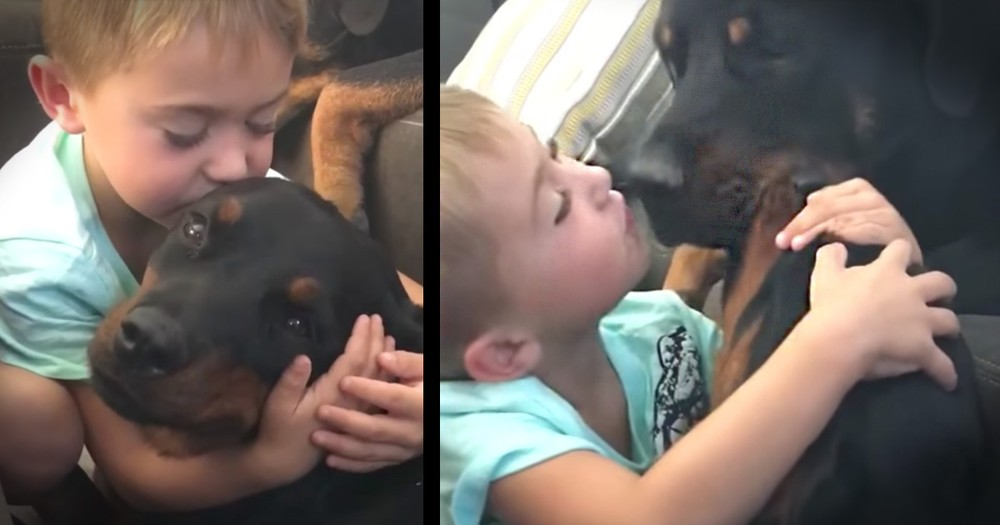 Boy Rewards Well-behaved Dogs With Kisses