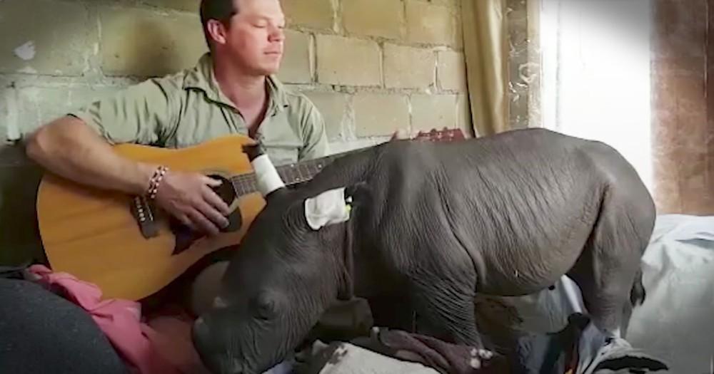 Caretaker Plays Baby Rhino A Sweet Lullaby