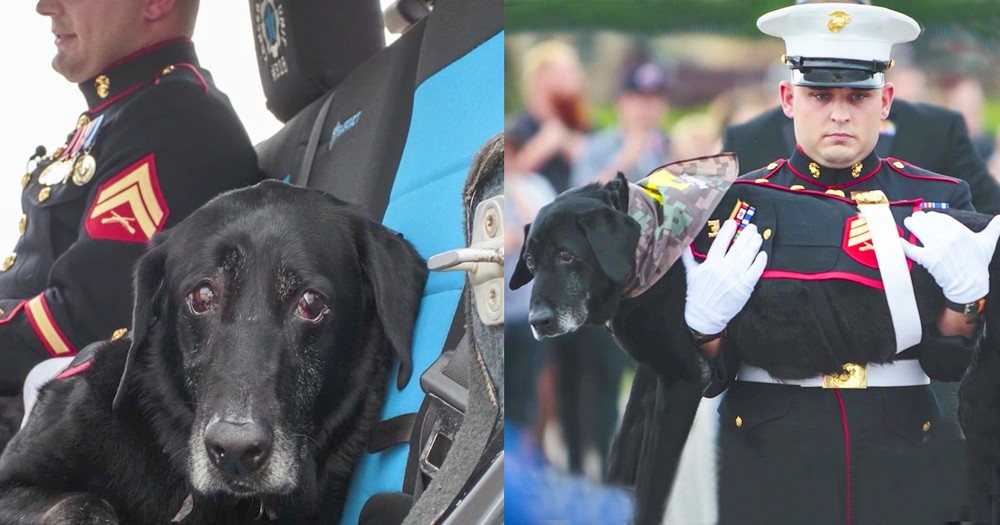 Dying Marine Dog Honored In Goodbye Sendoff