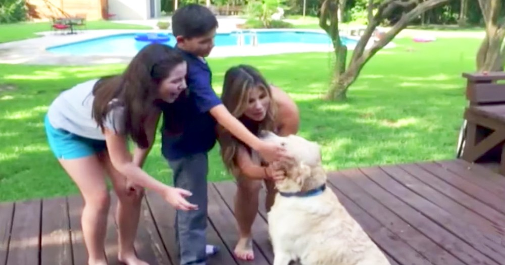 Lost Dog Reunites With Owner After A Year Missing