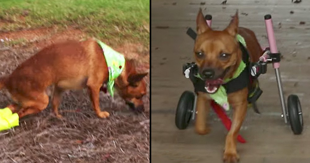 Wounded Dog Finds A Loving Forever Home