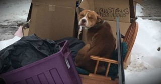 Poor Dog Thrown Out With The Trash In The Freezing Cold Gets 2nd Chance