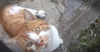 Injured Stray Cat Asks For Help At Stranger's Door Step