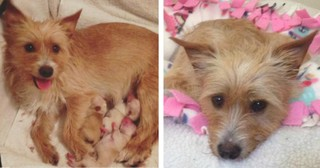 Mama Dog Grieving The Loss Of Her Puppies Gets A 2nd Chance at Love