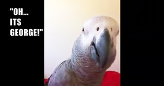 Smart Parrot's Hilarious Reaction To Seeing His Reflection