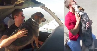 Beloved Dog Travels Across Country To Reunite With Owner