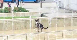 Hilarious Dog Can't Stop Jumping With Water Fountain