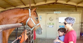 Smart Horse Cutely Nods Head To Answer Owner's Questions