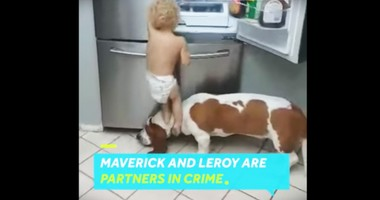 Toddler And His Doggy BFF Are Mischievous Team