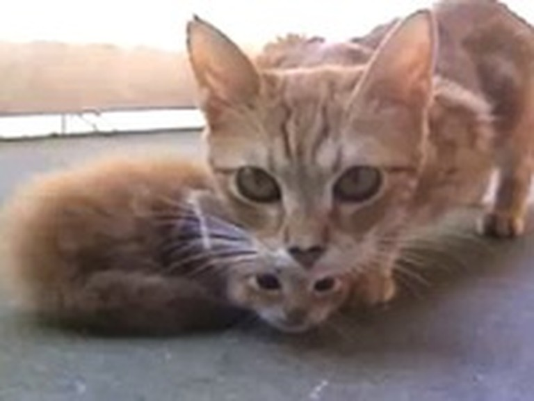 Mama Cat Comes to the Rescue of her Kitten