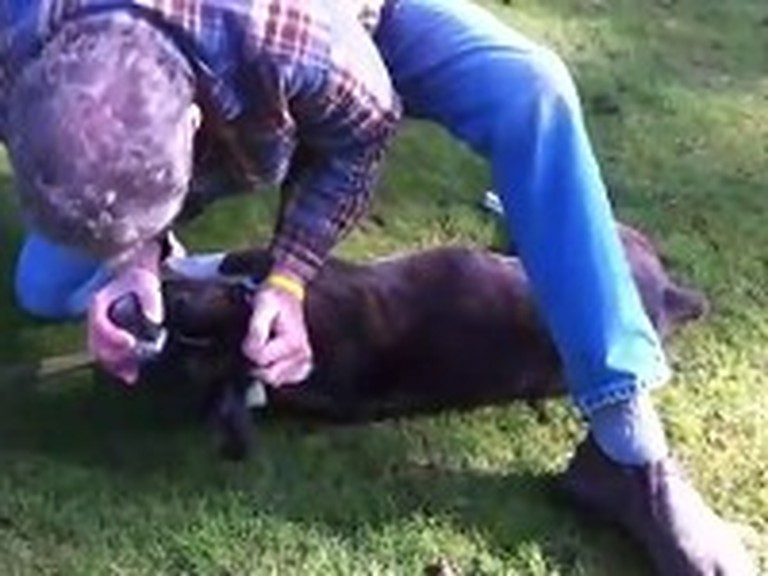 Man Saves a Dog by Giving CPR - Incredible Video