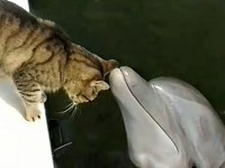 Kitty Cat and Dolphin Make Unlikely Best Friends