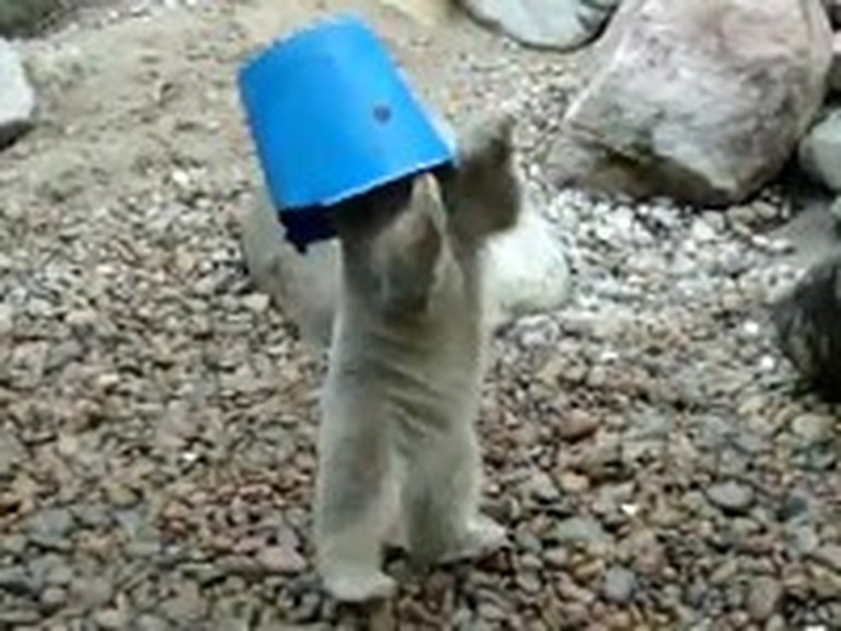 Meet the Baby Polar Bear That Just Loves his Bucket