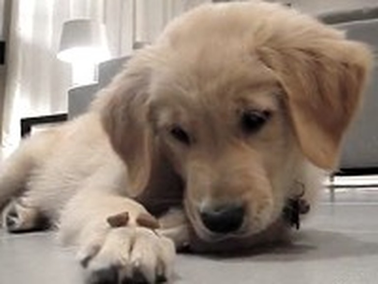 Adorable Puppy Shows Amazing Self Control