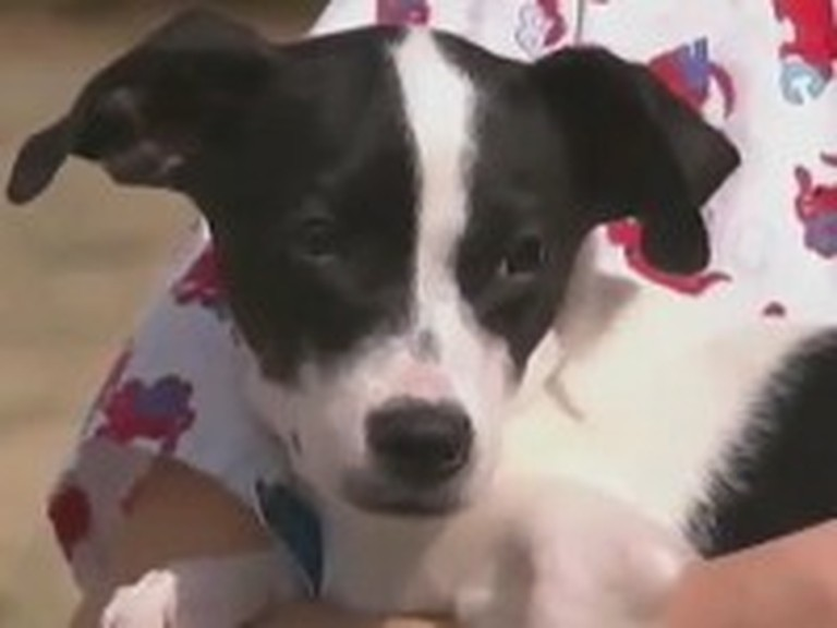 Abandoned Puppy Survives Death Twice