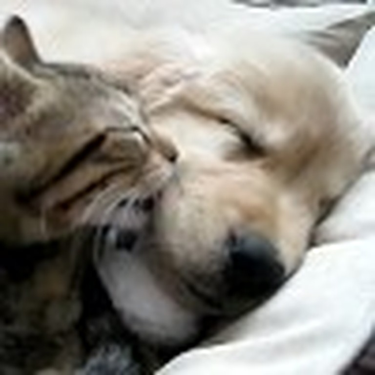 Kitten Gives a Puppy a Bath While He Sleeps