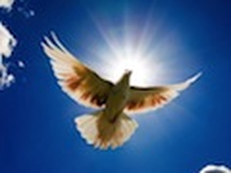 Peaceful Dove Flying in the Sky