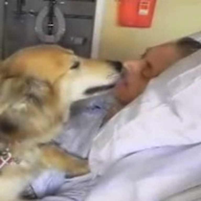 Homeless Man's Dying Wish to be Reunited with his Dog