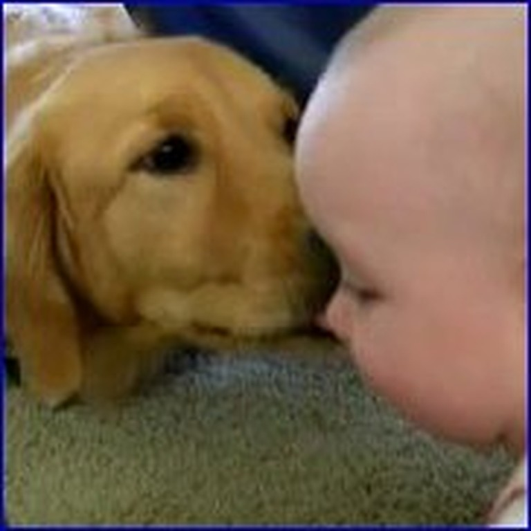 Doggy and Baby Get Along Like Best Friends - So Cute