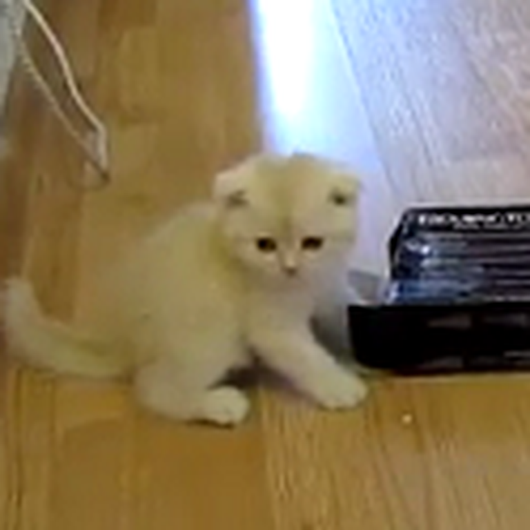 A Kitten and a Random Box to Brighten Your Day