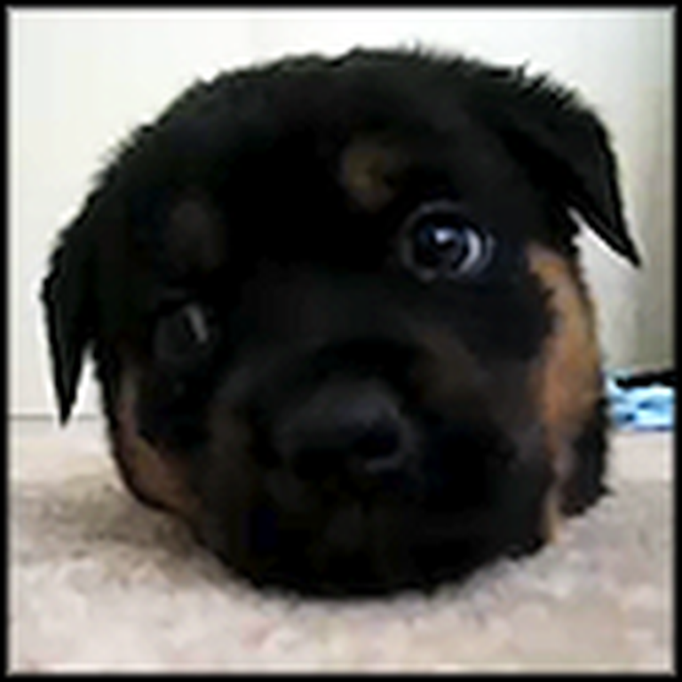 The Cutest Puppy Ever Just Wants to Say Hello