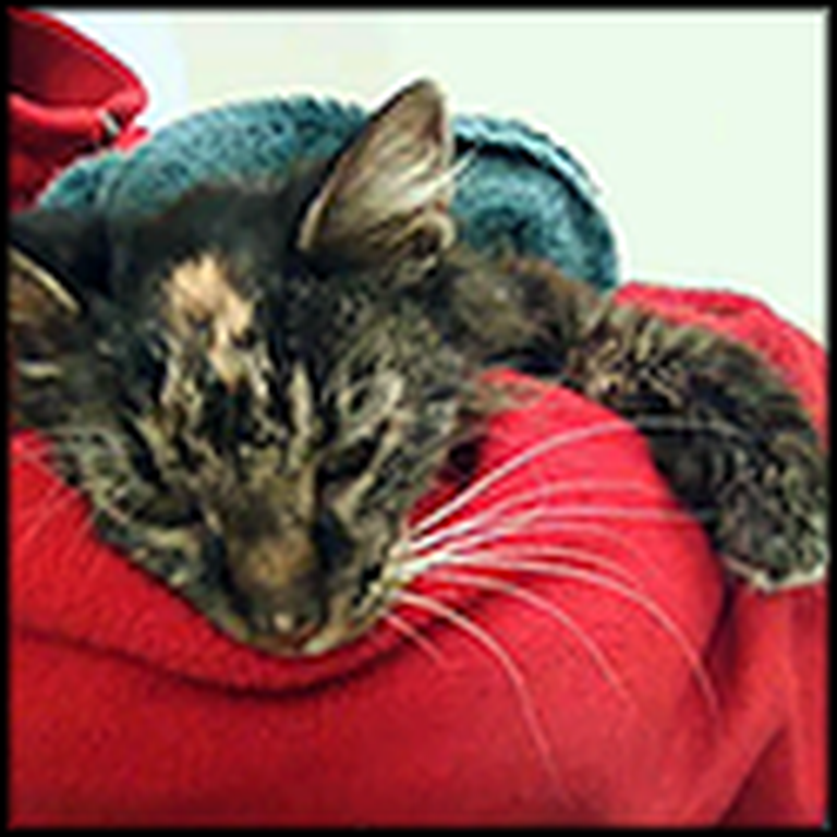 Libby - The Inspiring Story of a Neglected Cat