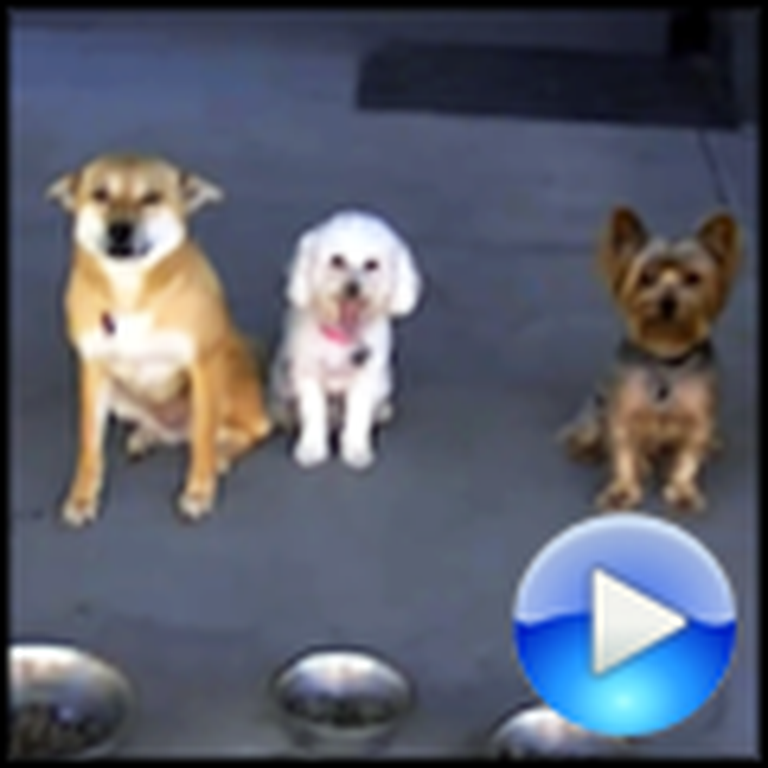 Five Awesome Dogs Wait For Prayer Before Eating