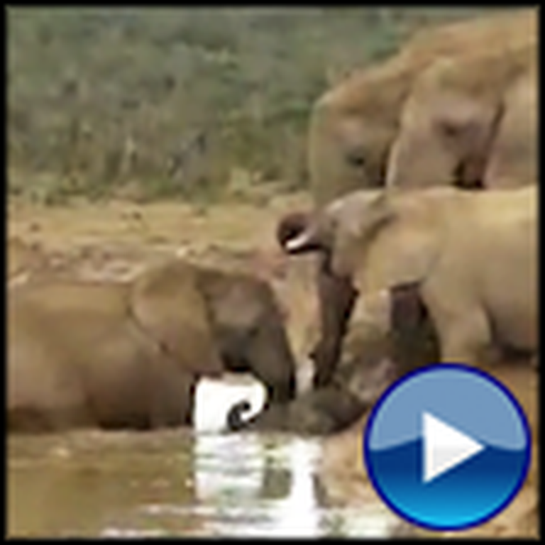 Elephants Rescue a Trapped and Drowning Baby Elephant