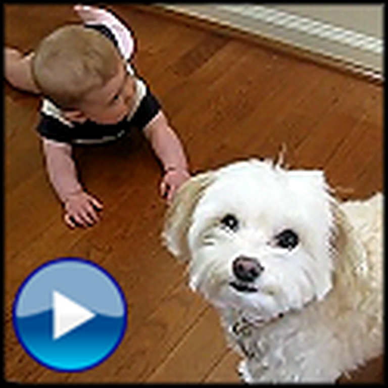 Dancing Dog and Laughing Baby Are Way Too Cute