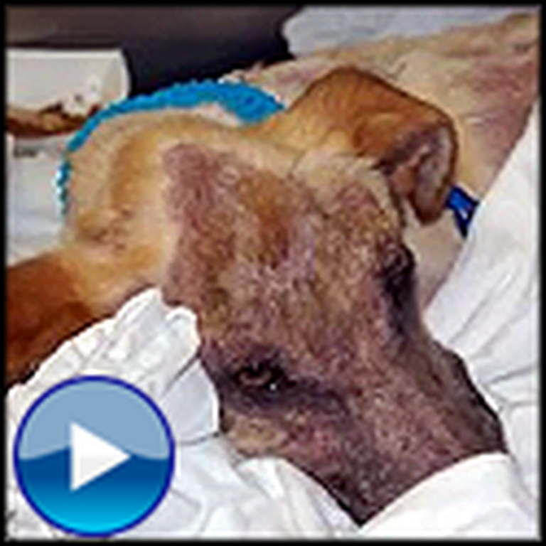 The Heartwrenching Story of Braveheart the Dog