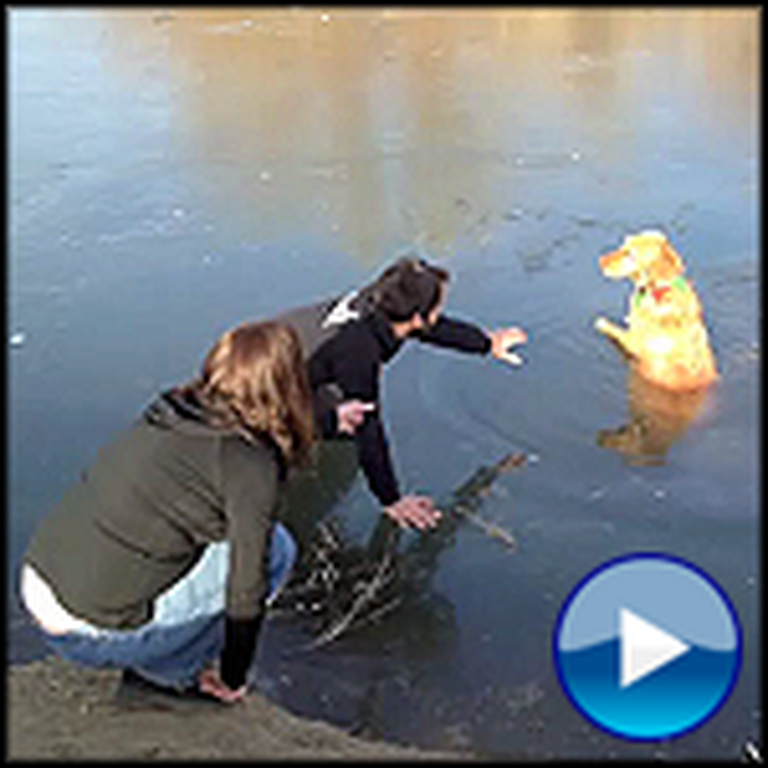 Two People Create a Human Chain to Save a Trapped Dog